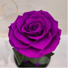 Фіолетова троянда в колбі Lerosh - Premium 27 см