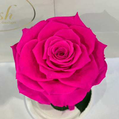 Hot Pink Eternal Rose in Flask Lerosh - Premium 27 cm on a white stand
