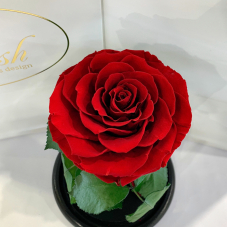 Червона троянда в колбі Lerosh - Premium 27 см