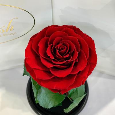 Краснаяроза в колбе Lerosh - Premium 27 см