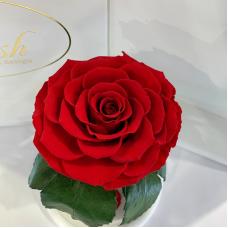 Червона троянда в колбі Lerosh - Premium 27 см на білій підставці
