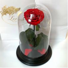 Червона троянда в колбі Lerosh - NEW Premium 27 см