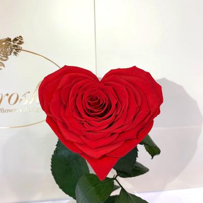 Червона троянда в колбі Серце Lerosh - Premium 27 см на білій підставці ORIGINAL