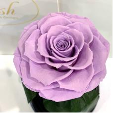 Лілова троянда в колбі Lerosh - Premium 27 см