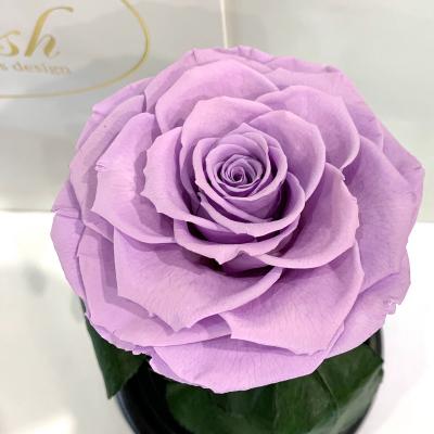 Лілова троянда в колбі Lerosh - Premium 27 см ORIGINAL