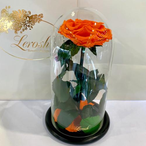 Оранжевая роза в колбе Lerosh - Premium 27 см ORIGINAL