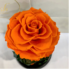 Помаранчева троянда в колбі Lerosh - Premium 27 см