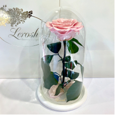 Pink Pearl Eternal Rose in Flask Lerosh - Premium 27 cm