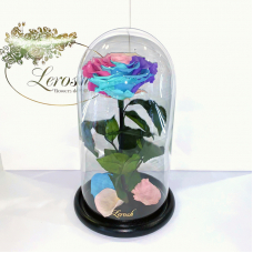 Ніжна Райдужна троянда в колбі Lerosh - Premium 27 см