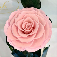 Рожева троянда в колбі Lerosh - Premium 27 см