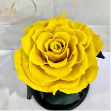 Жовта троянда в колбі Lerosh - Premium 27 см