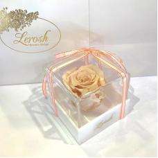 Кремовий стабілізований бутон троянди в подарунковій коробці Lerosh - Classic