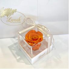 Orange Preserved Rosebud Gift Box Lerosh - Classic