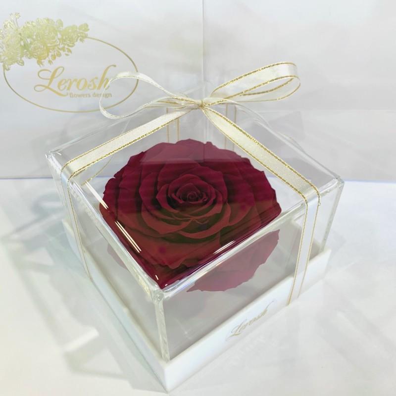 Бордово-малиновий стабілізований бутон троянди в подарунковій коробці Lerosh - Premium