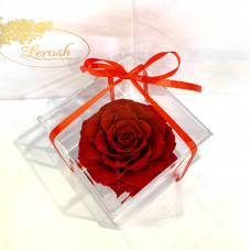 Red Preserved Rosebud Gift Box Lerosh - Premium