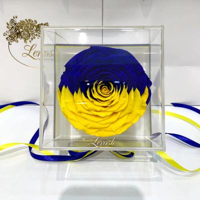 """Стабілізований бутон троянди """"Прапор України"""" в подарунковій коробці Lerosh - Premium"""