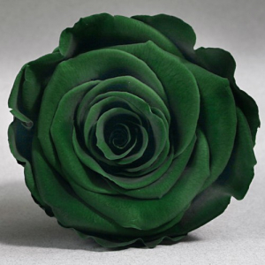 Зеленая роза в колбе