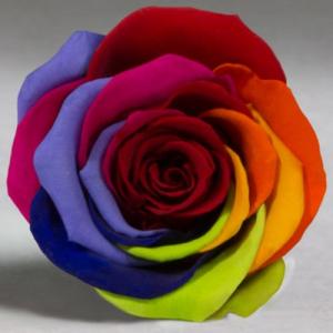 Яркая Радужная роза в колбе