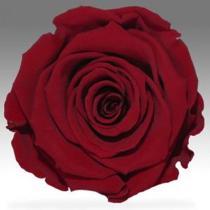 Бордовая темно-красная роза в колбе