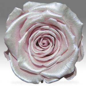 Розовая Жемчужная роза в колбе