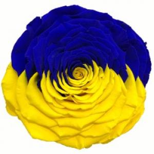 """Роза в колбе """"Флаг Украины"""""""